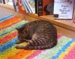 Book-Dock-cat