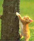 Catsclimbing_small