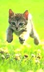 Catsrunning_small